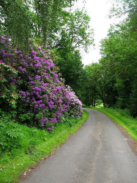 Greenlawdean