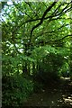 SX2958 : Tree swing and treehouse, Lydcott Woods by Kevin Hale