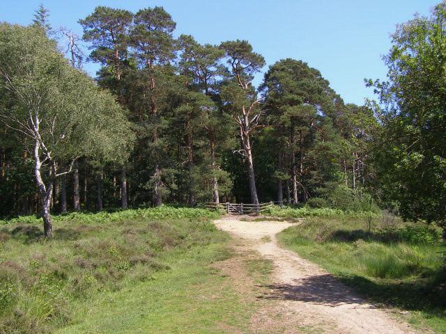 Approaching the Rookery, Clumber Inclosure, New Forest