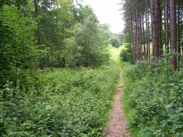 Path through Prior's Wood