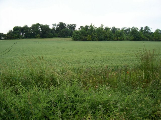 Woodland in field