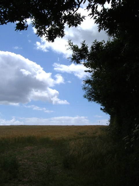 Field edge beside Waddeton Road