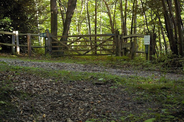 Farningham Wood Nature Reserve
