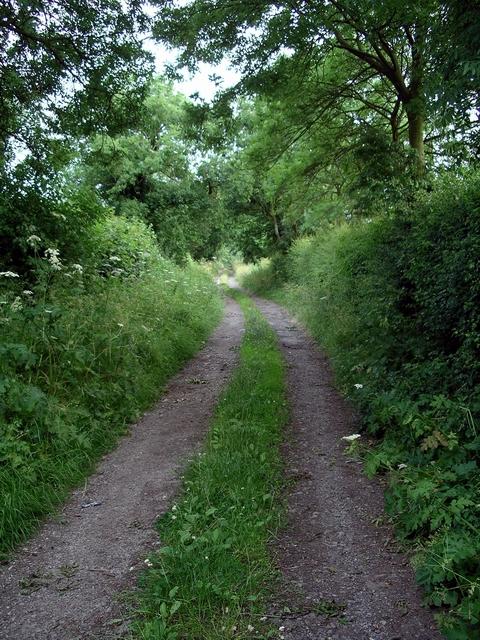 Track, Woodlinkin