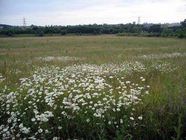 Meadow near Loscoe