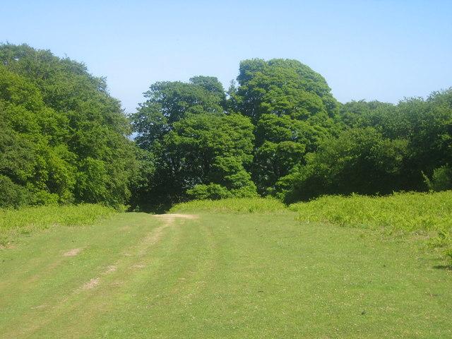 Offa's Dyke Path - Hergest Ridge