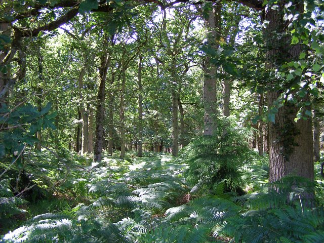 Within the Ferny Knap Inclosure, New Forest