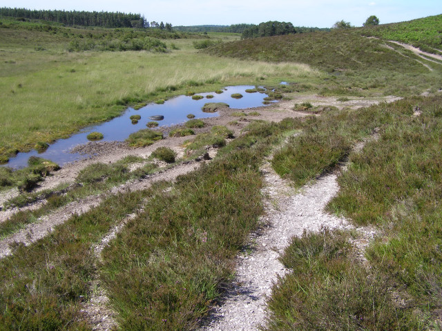 Duck Hole Bog, New Forest