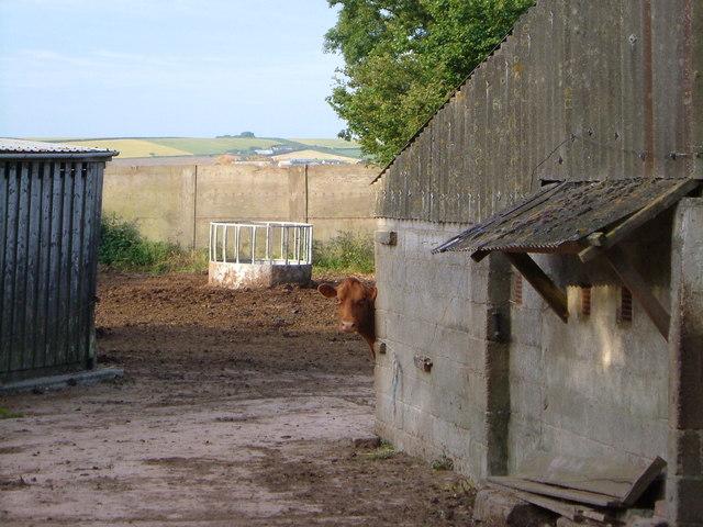 Scene at Higher Broadgates Farm
