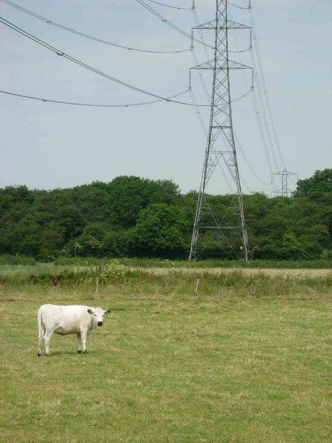 Farmland near Leire