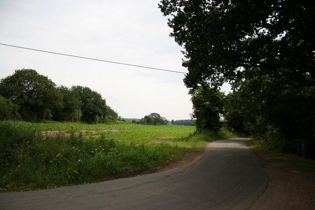 Lane to Skellingthorpe Old Wood