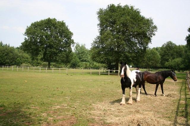 Horses in Skellingthorpe Old Wood
