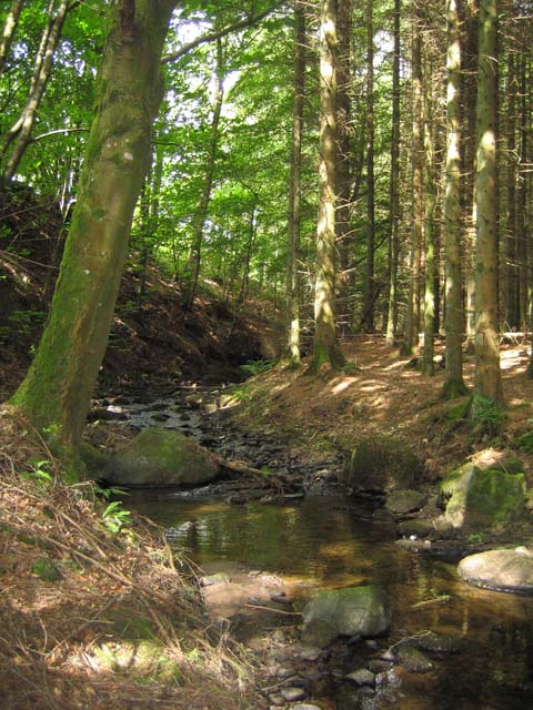 Stream near Cornton House