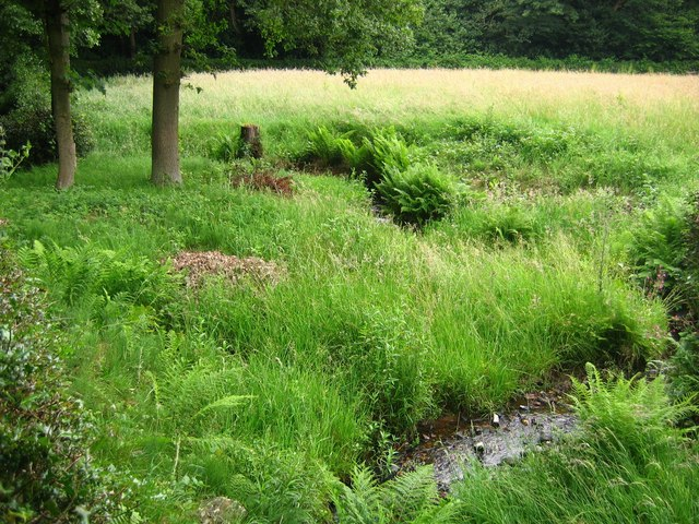 Lindwaysprings Brook