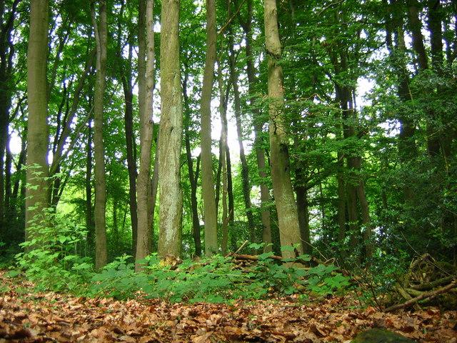 Lindway Springs Wood