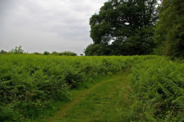 Footpath Near Beechen Wood