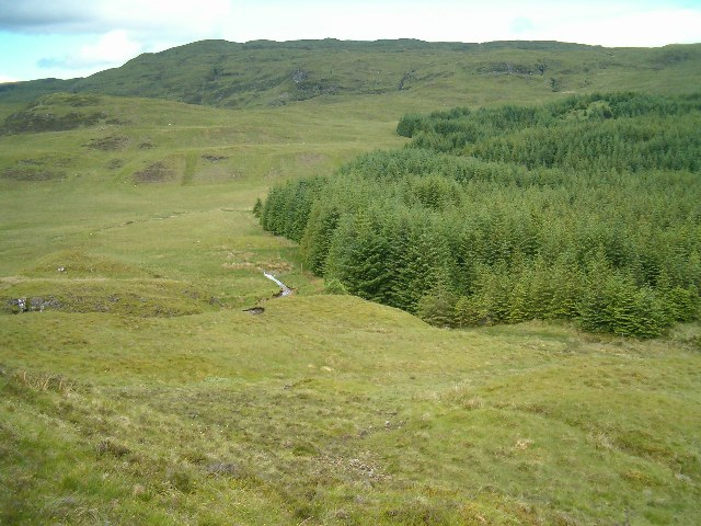Moorland above the forest
