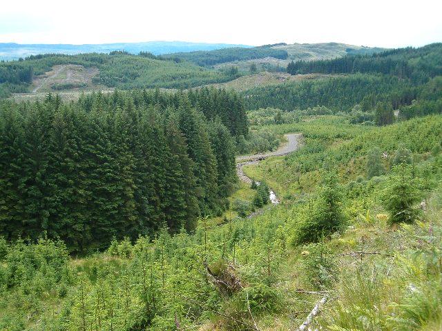 Inverinan Forest