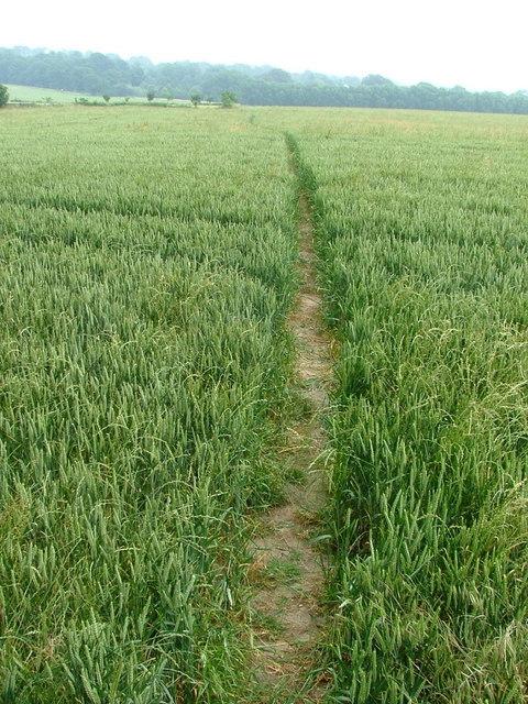 Path through a wheat field