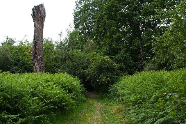 Beechen Wood Footpath