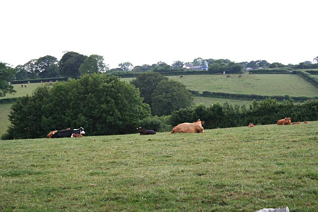 Fields outside Lamerton Village