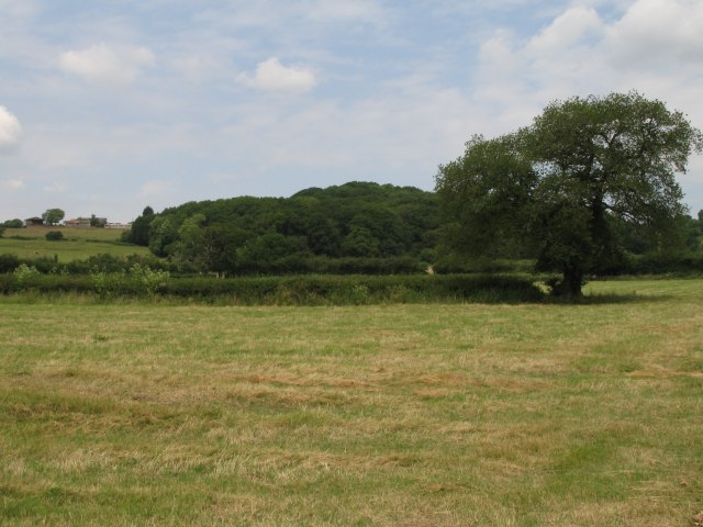 Open fields and woodland west of Bromham