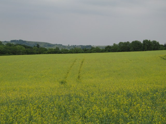 View over oil seed rape adjacent to Cuff's Corner