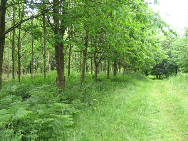 Woodland on the Bowood Estate