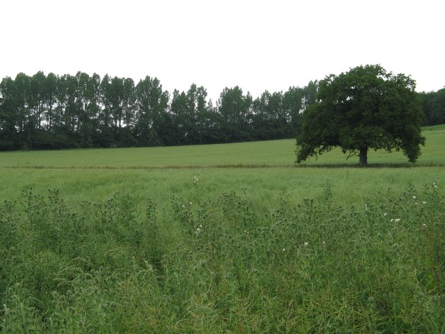 Open field on the Bowood Estate