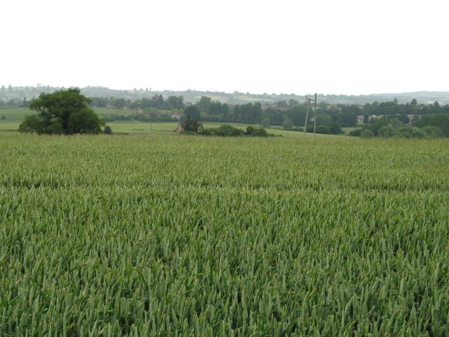 Crops on the Bowood Estate