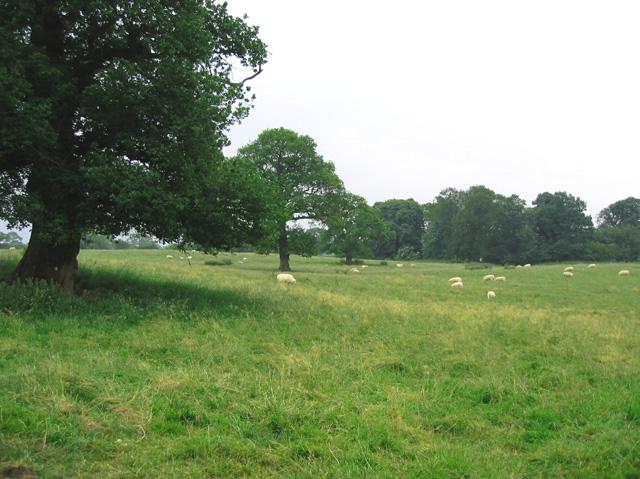 Tree-studded pasture