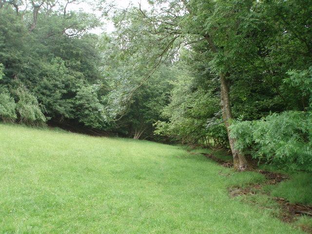 Vigo Wood & stream