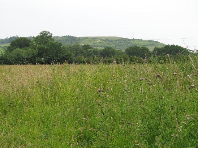 Field near Heddington Wick