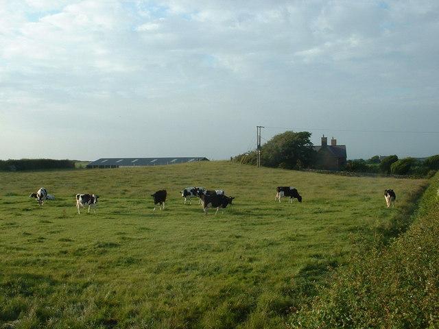 Cae Morfa Farm