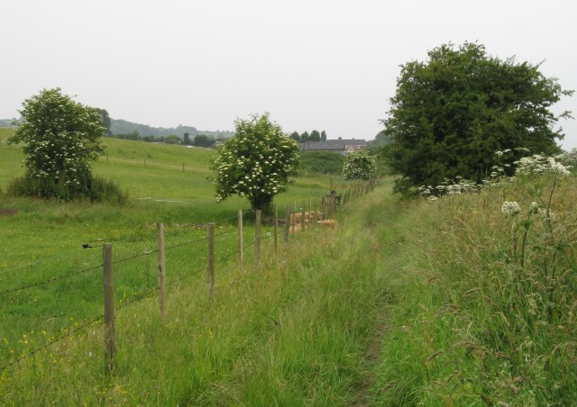Bridleway near Hampsley Hollow