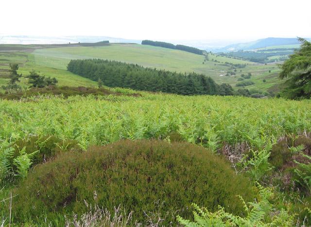 View east of Vivod Mountain