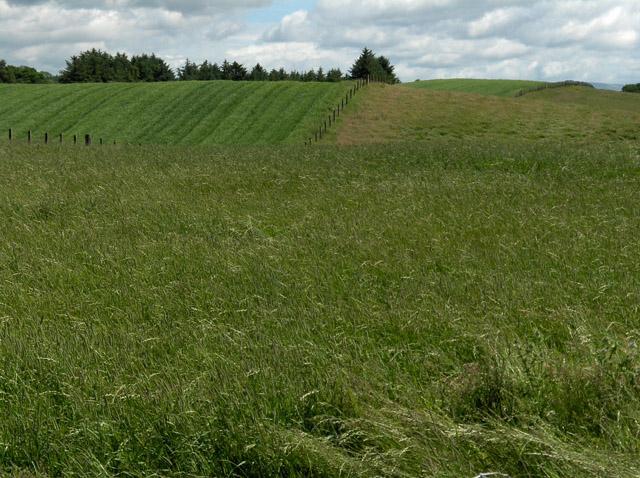 Farmland, north of Thornhill