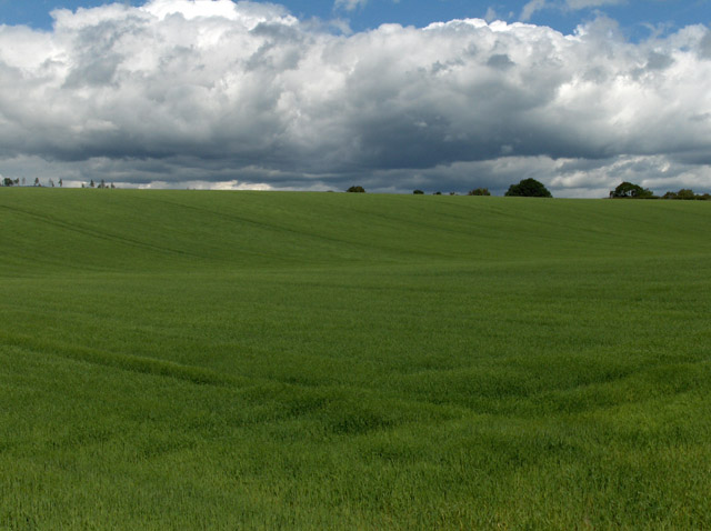 Farmland, east of Thornhill