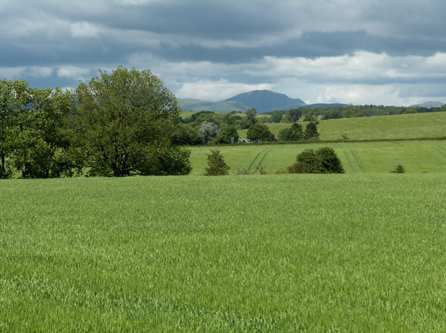 Farmland, southeast of Thornhill