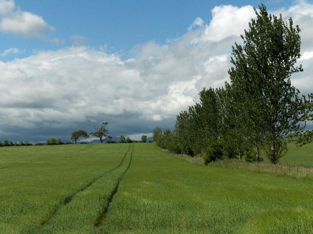 Farmland, Ballinton