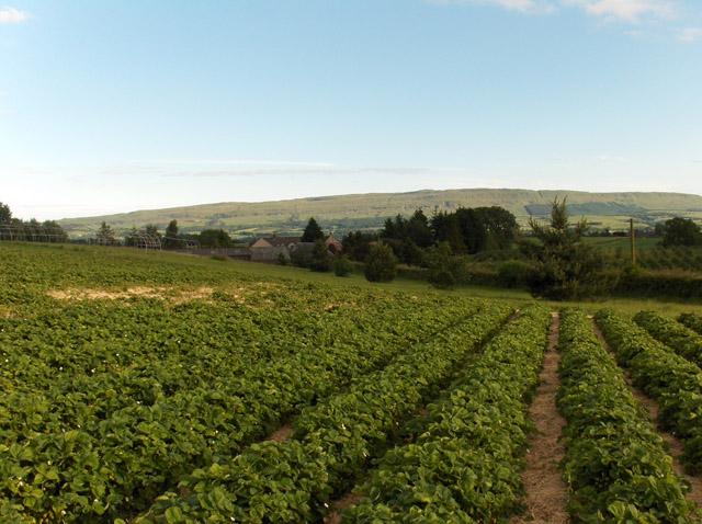 Boghall Farm