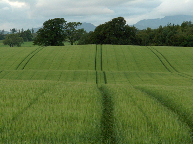 Farmland, Upper Spittalton