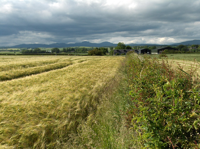 Barley, Forth valley