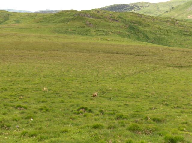 Moorland near Braeleny