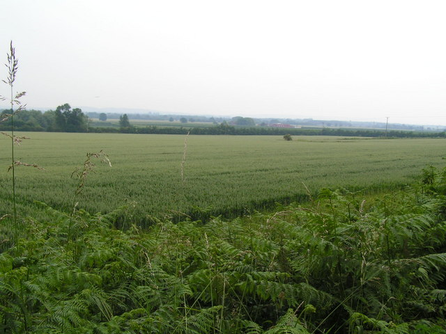 Wheat fields, North of Tudeley.