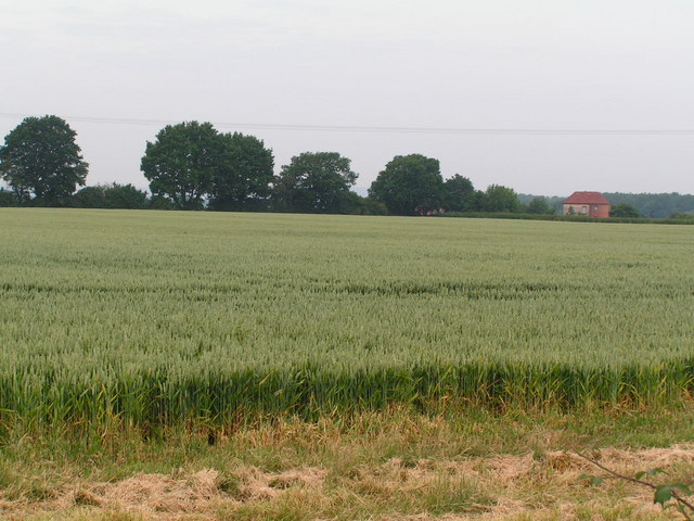 An arable field, North of Tudeley.