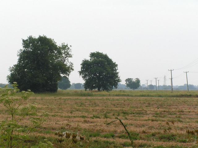 Two trees in a fallow field, North of Tudeley.