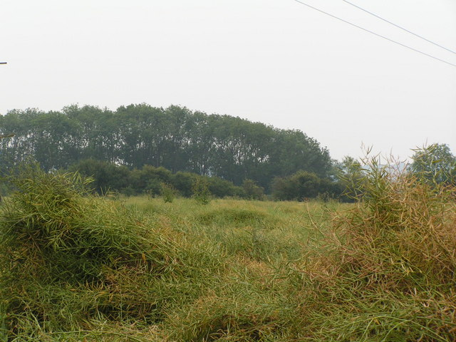 Woods across a field, North of Tudeley.