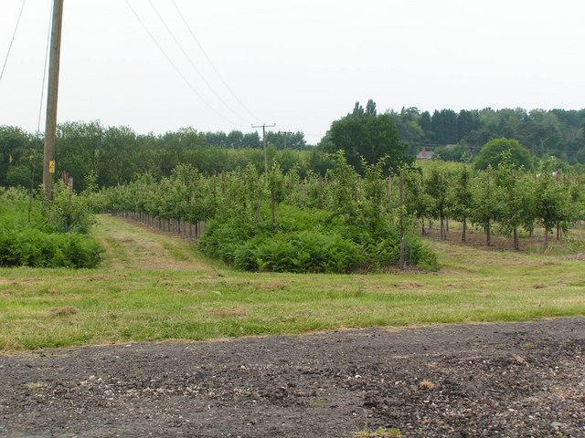 Orchards, Pippins Farm, Pembury.
