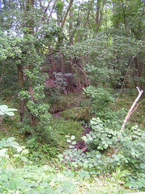 Alder stream flowing through woodland.